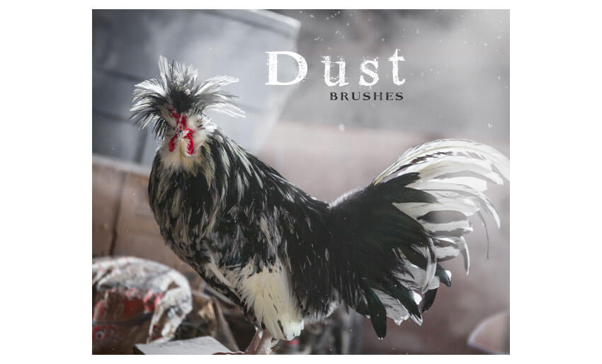 Dust Brushes