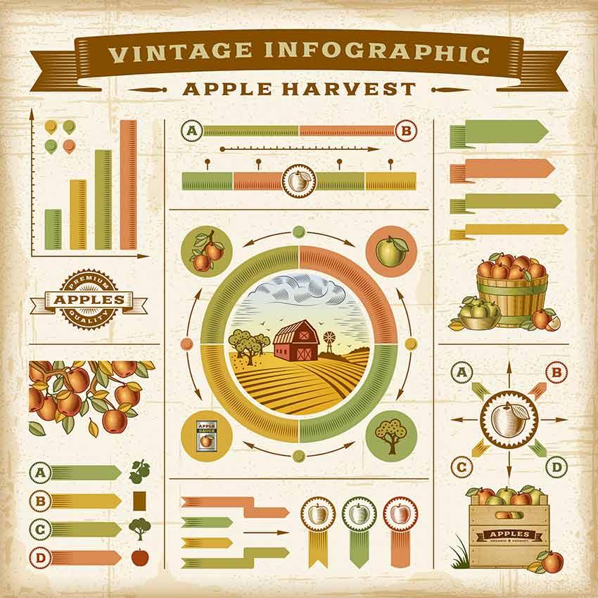 Vintage Apple Harvest Infographic Set