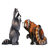 cool pictures to draw red panda  raccoon