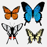 easy drawing ideas draw butterfly