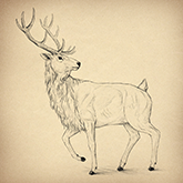 easy drawing ideas draw deer