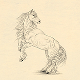 easy drawings step by step horse