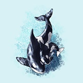 cute easy drawings dolphins