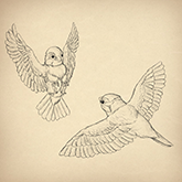 cool pictures to draw  birds