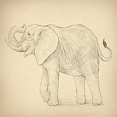 cool designs to draw elephant