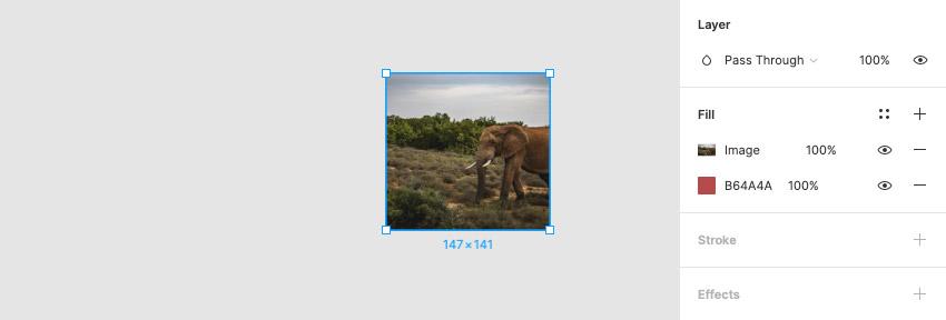 elephant fill
