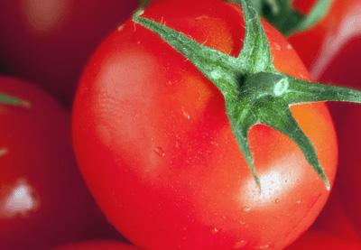 Tomato retina