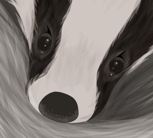 Baby Badger Close Up
