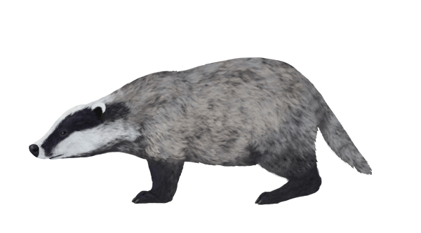 Colour Scheme for a Badger