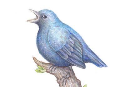 Birdpreview