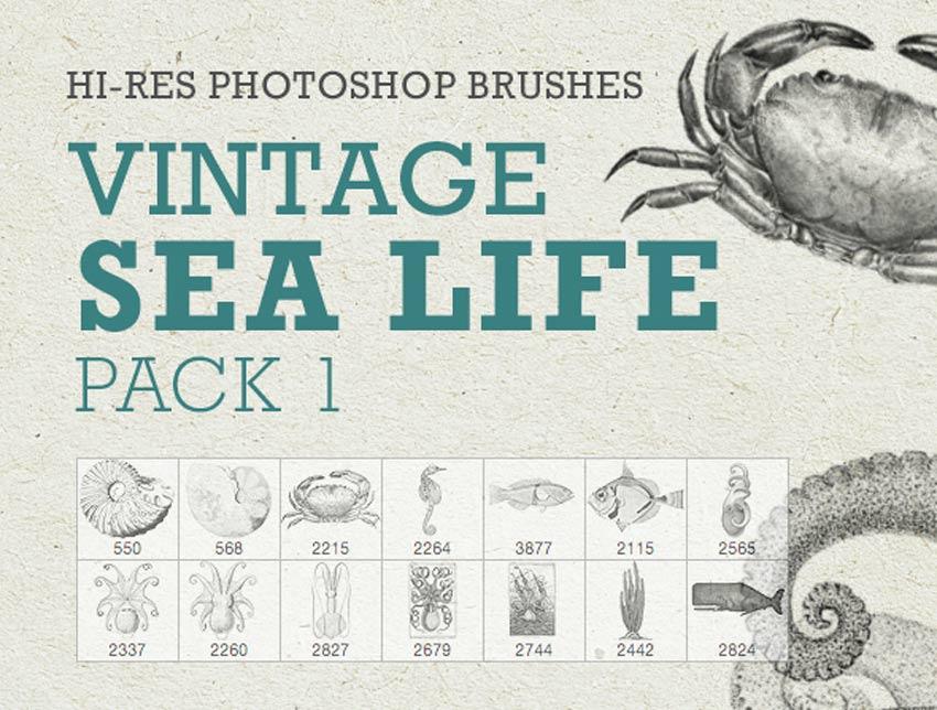 Vintage Sea Life Pack 1