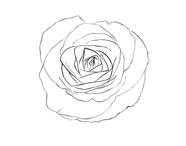 The Final Rose Sketch