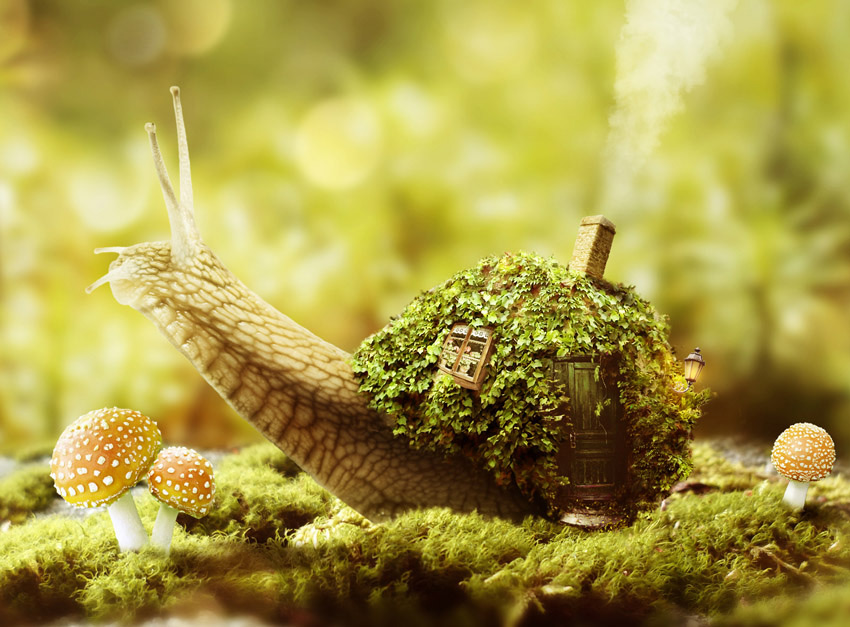 Create a Fantasy Snail Photo Manipulation