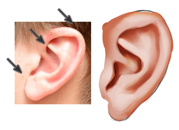 Highlighting an Ear in Photoshop