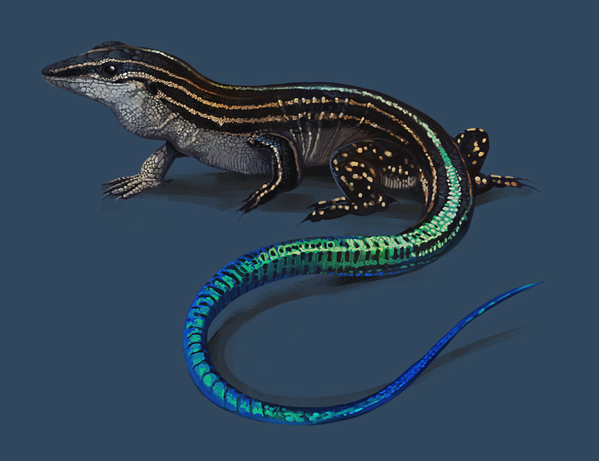 Puerto Rican Ground Lizard by Ivy Gladstone