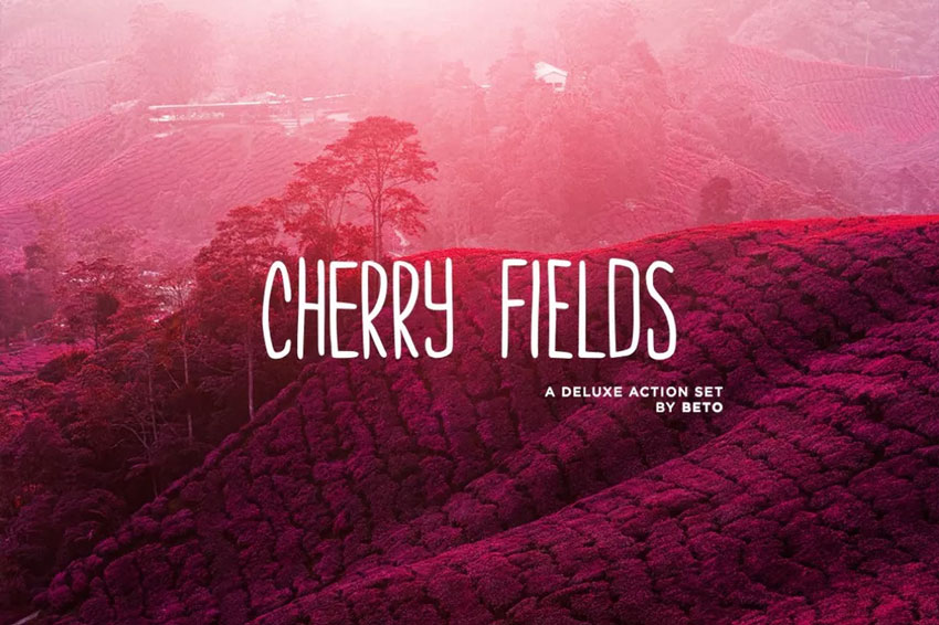 Cherry Fields Action