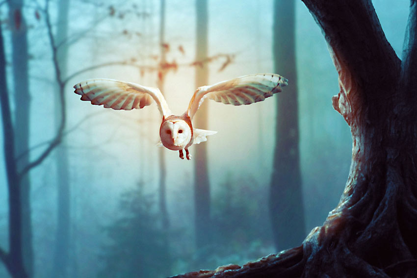 Owl Photo Manipulation Photoshop Tutorial