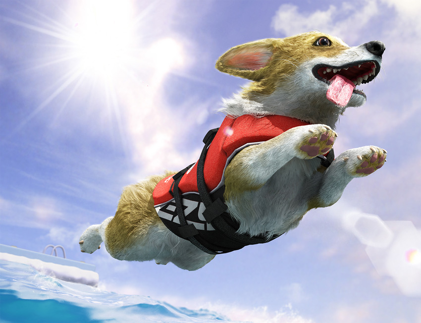 Flying Corgi by Te-Yu Liu
