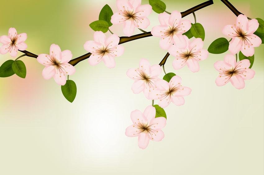 Spring Flowers Gradient Mesh Illustrator Tutorial