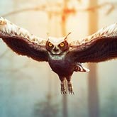 Flying Owl Photo Manipulation