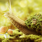 Fantasy Snail Photo Manipulation