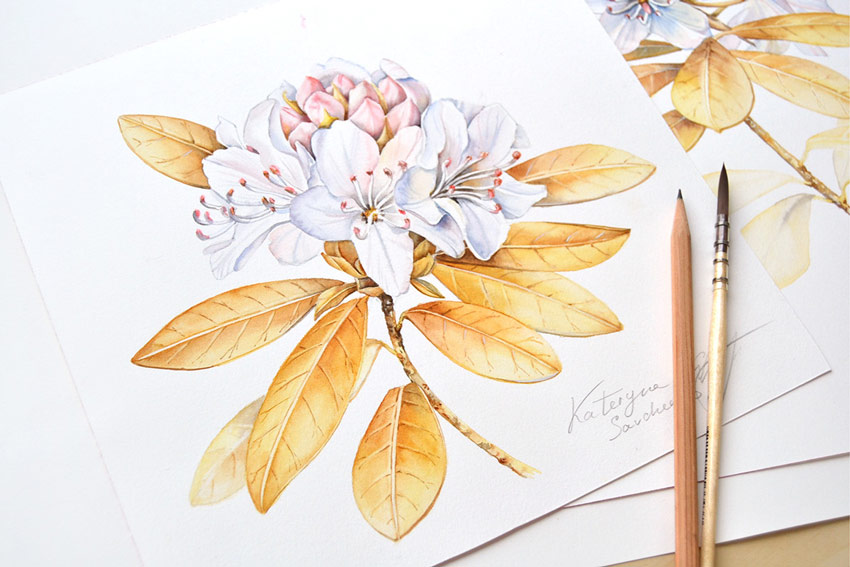 Floral Illustrations for Royal Insignia by Kateryna Savchenko
