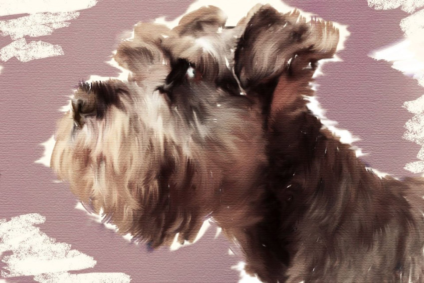 Create a Painted Pet Portrait Effect in Adobe Photoshop