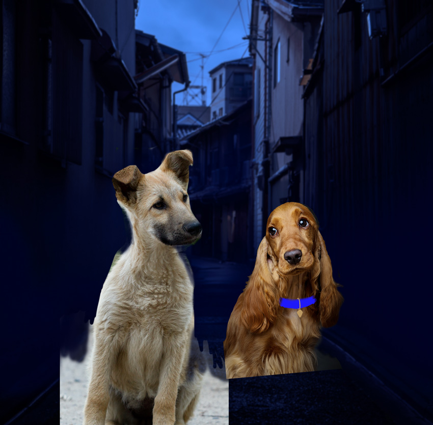 lady and tramp result after liquify