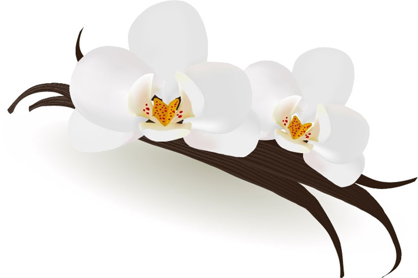 How to Draw Vanilla Flowers With Mesh in Adobe Illustrator