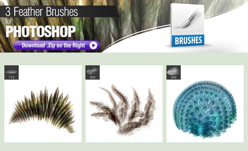 Photoshop Brushes for Painting Feathers