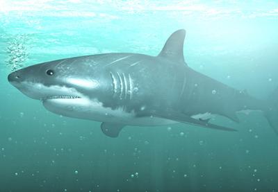 Maya shark series retina