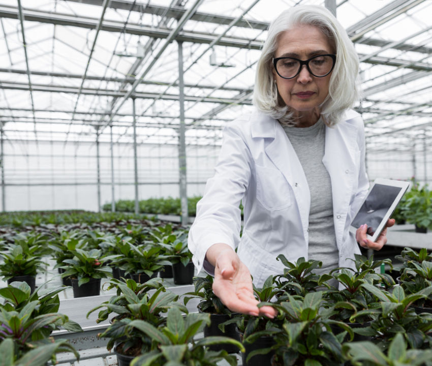 woman wearing a white lab coat inspects plants in a greenhouse