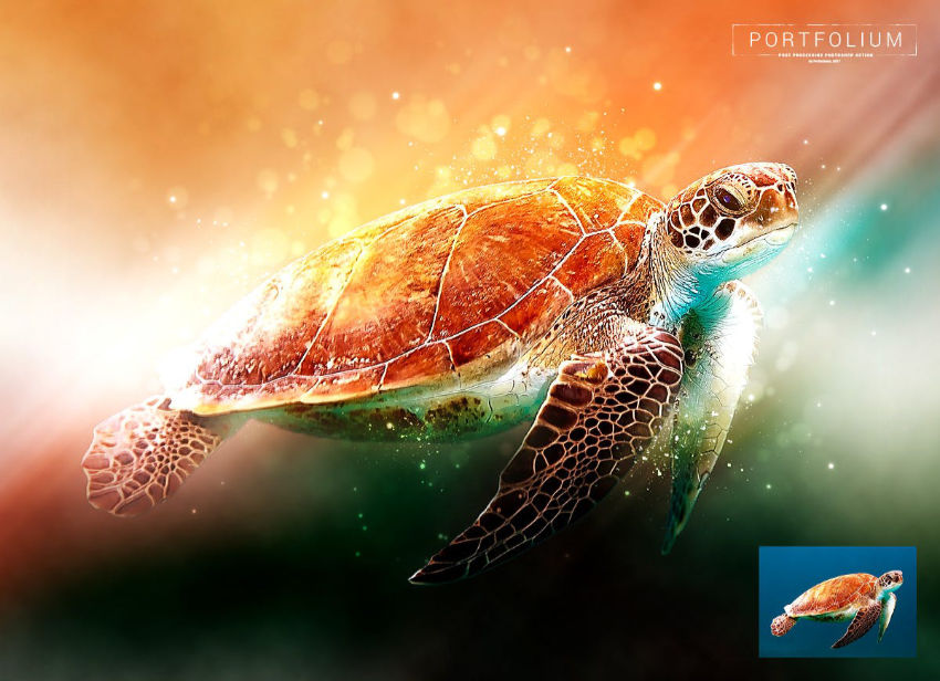 See turtle in rainbow-coloured light
