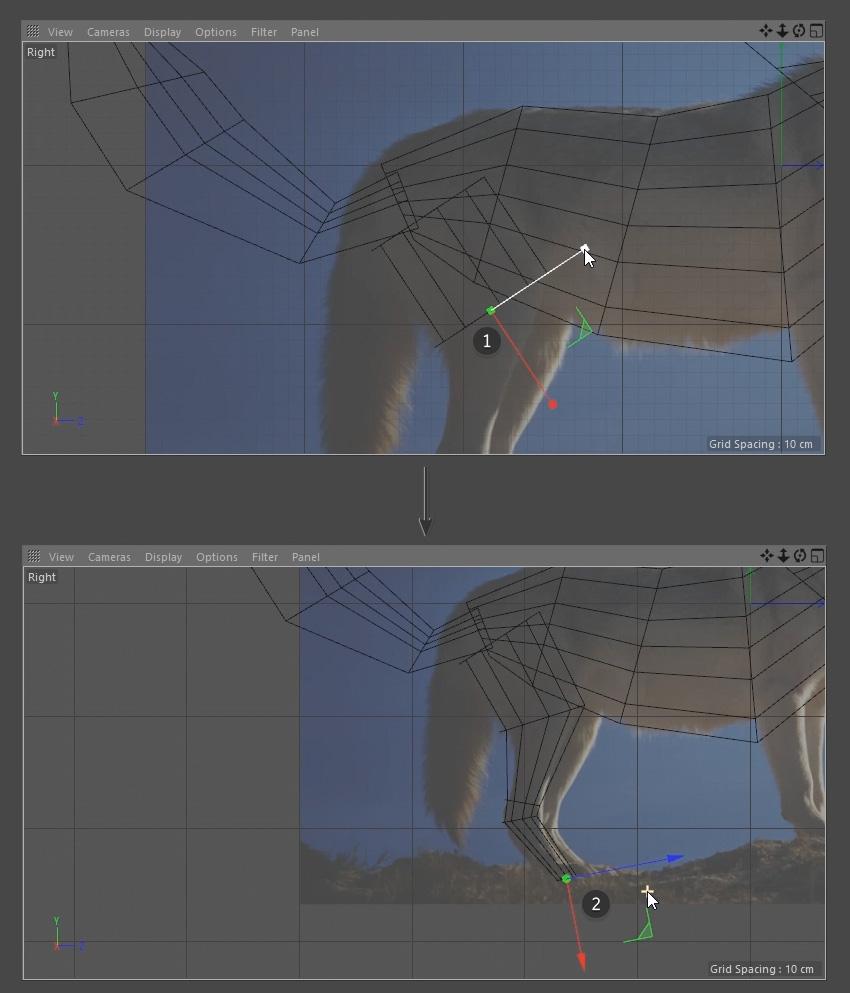 Modelling the Wolfs leg