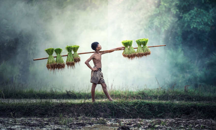 Boy carrying pole of harvested grains with Filmic Contrast action applied