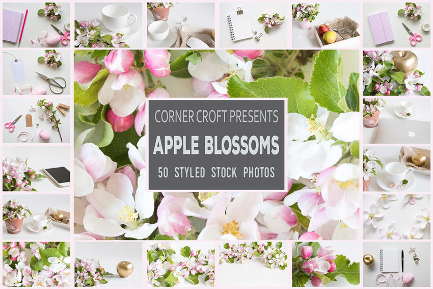 Apple Blossom Styled Stock Photo Bundle