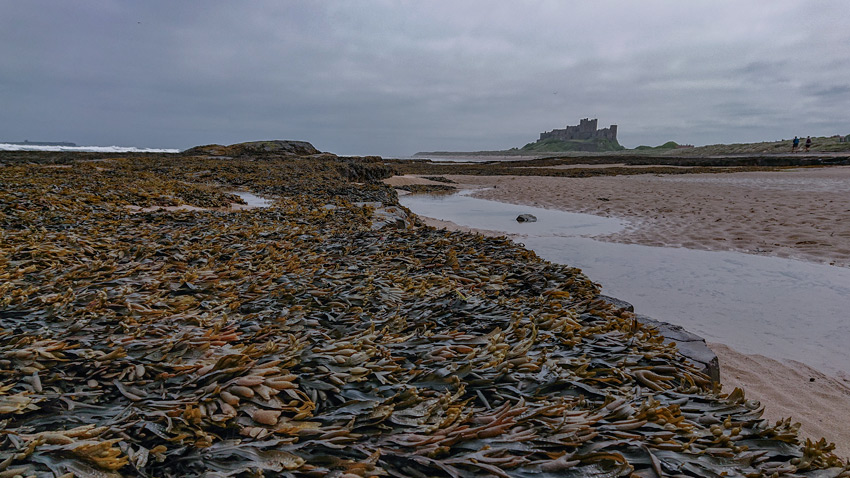 bamburgh taken with mobile