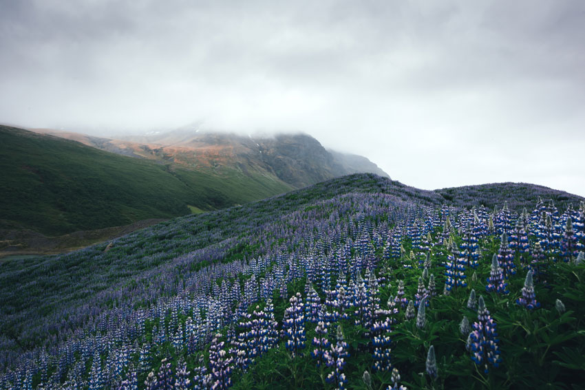 Typical Iceland Landscape by ivankmit via Envato Elements