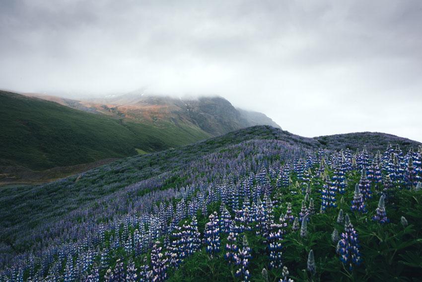 Typical Iceland Landscape by ivankmit via Envato Elements