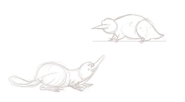 Platypus and steropodon galmani
