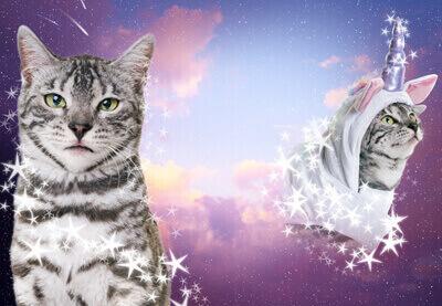 Image of QT Stars TutsPlus Cats preview