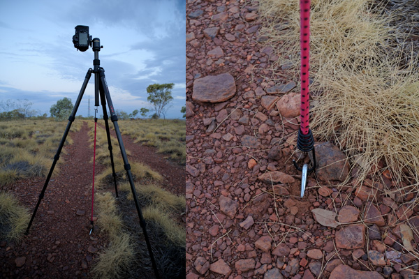 Tripod secured to the ground by elastic strap