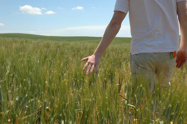 Hand running through tall grass