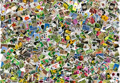 the abcs of photo sorting how to turn a mess of pictures into an