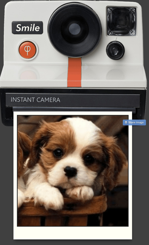 Instant camera image of a dog