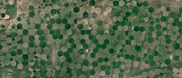 A aerial view of circular fields from Google Maps