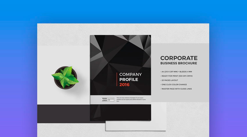 The Company Brochure