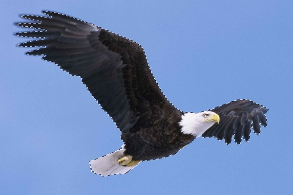 select eagle 1
