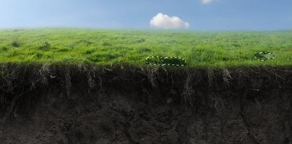 grass clone