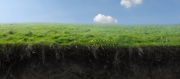 grass clone result